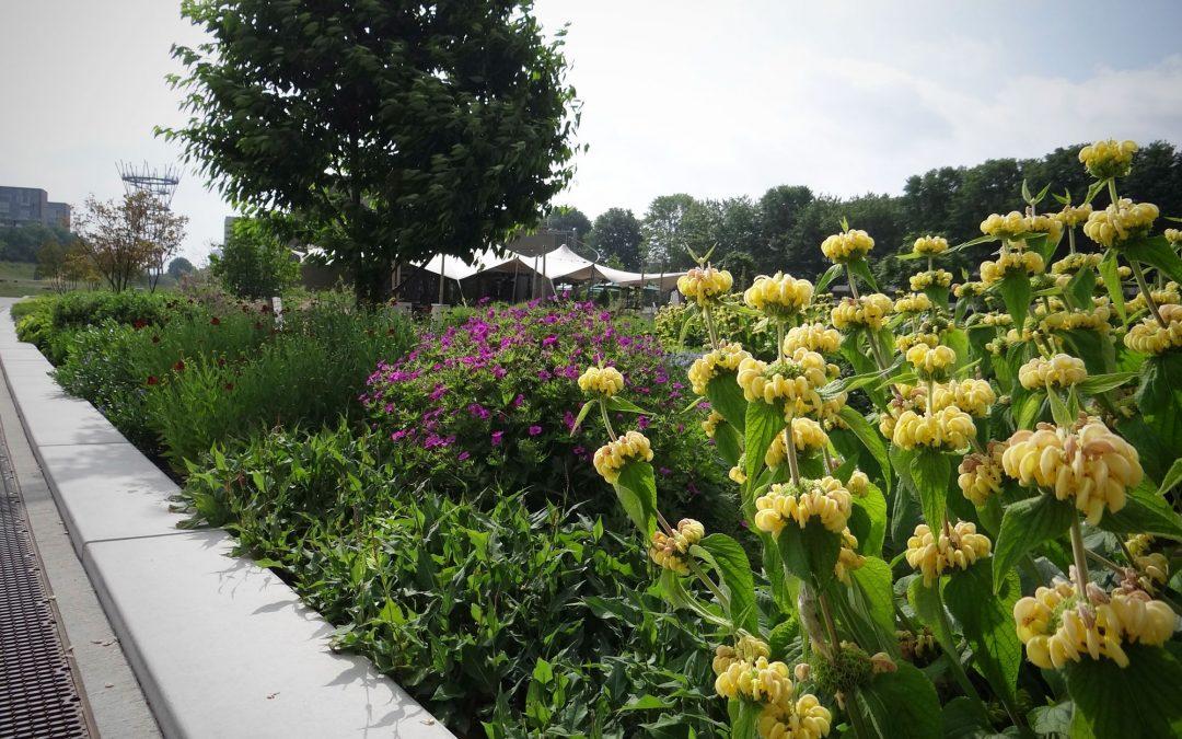 Groenaannemer Spoorpark genomineerd voor ELCA Green Park Award