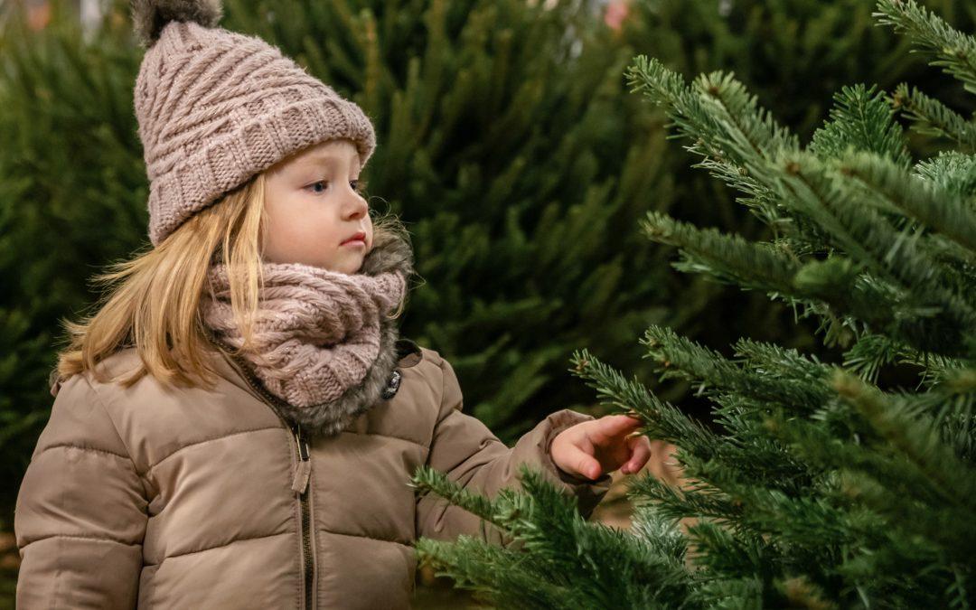 Kerstbomenverkoop in Spoorpark