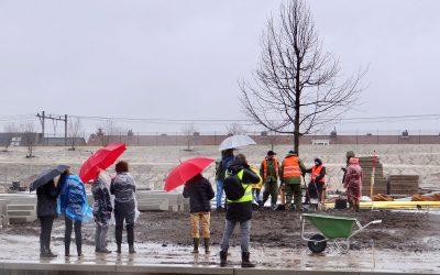 Monumentale lindeboom geplant in Spoorpark