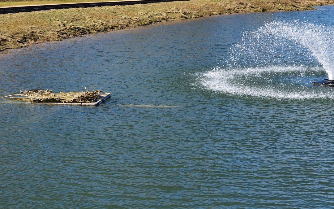 Broedplaats voor meerkoet in vijver gemaakt