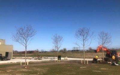 21 bomen in Spoorpark geplant